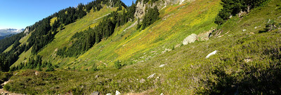 The wildflower meadows on this hike are the most expansive in my experience