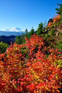 BillEdwards-Vine Maple-Kelly Butte-2712_TMTC.jpg
