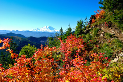 BillEdwards-Vine Maple-Kelly Butte-2711_TMTC.jpg