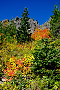 BillEdwards-Vine Maple-Kelly Butte-2694_TMTC.jpg
