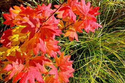 BillEdwards-Vine Maple-Kelly Butte-2776_TMDE.jpg
