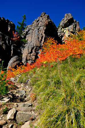 BillEdwards-Vine Maple-Kelly Butte-2713_TMTC.jpg
