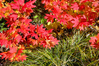 BillEdwards-Vine Maple-Kelly Butte-2777_TMDE.jpg