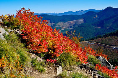 BillEdwards-Vine Maple-Kelly Butte-2775_tmtc.jpg