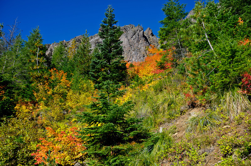 BillEdwards-Vine Maple-Kelly Butte-2698_699_700 _TMTC.jpg